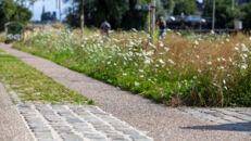 20210817_Oude Dokken_Houtdok_Openbaar Domein_Zitbanken_groen_wandelaars_fietsers_0045.jpg
