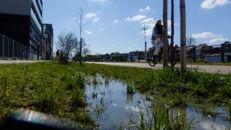 20210817_Oude Dokken_Houtdok_Openbaar Domein_Zitbanken_groen_wandelaars_fietsers_0008.jpg