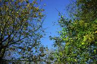 Bourgoyen (herfst)