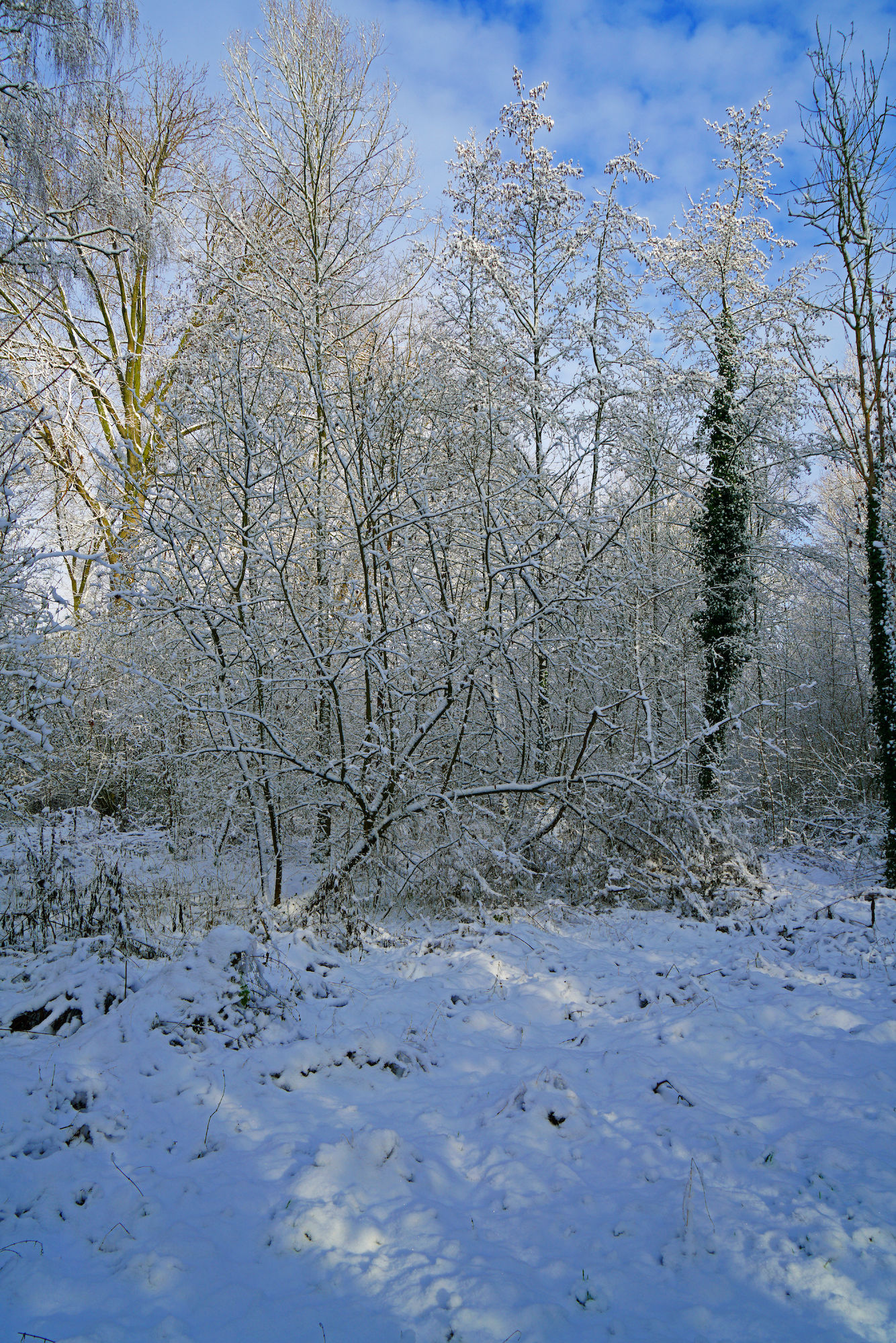 Bourgoyen  (winter)