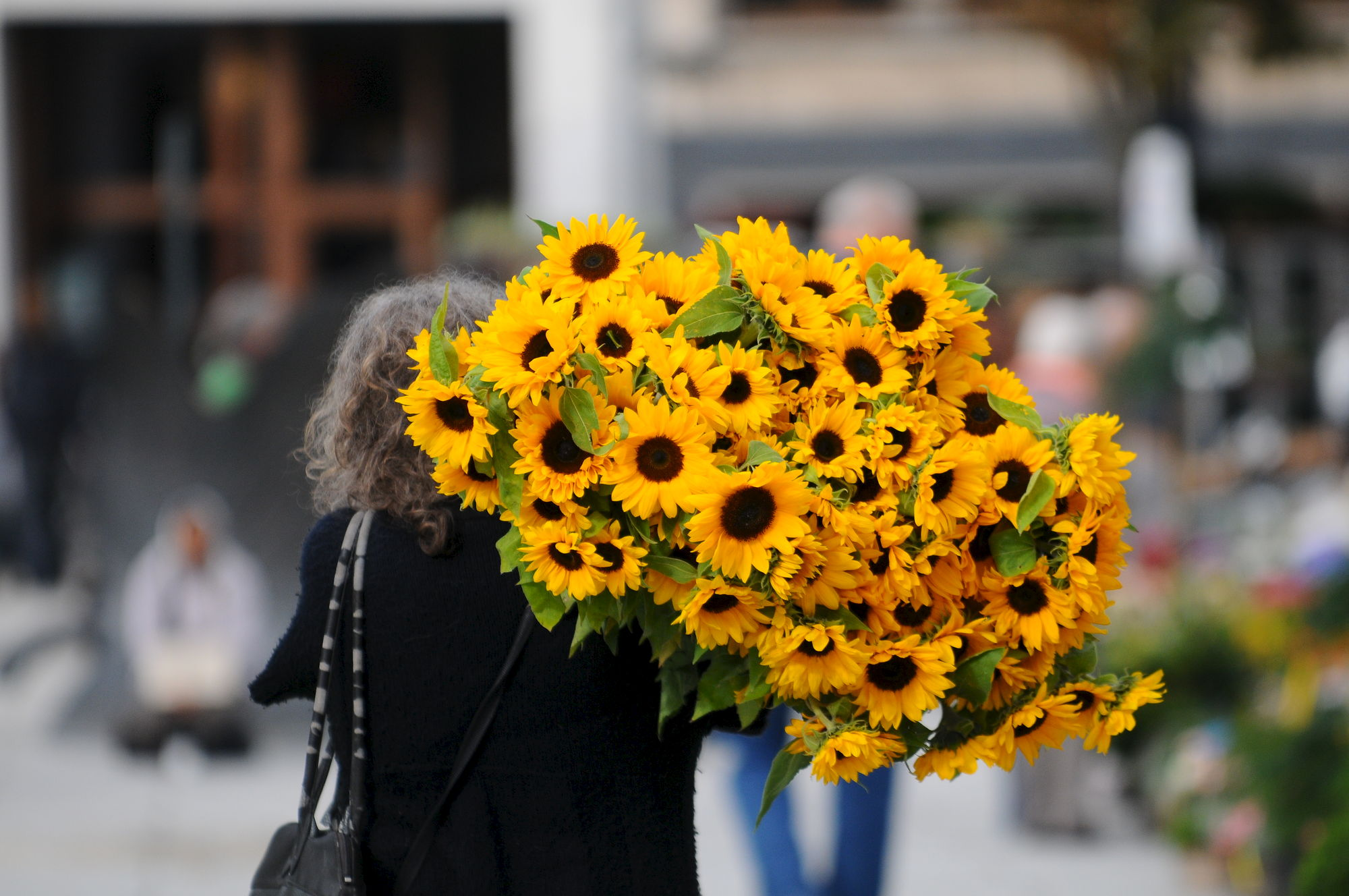 Zonnebloemen op de Kouter