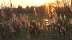 Groendienst_PARKEN_WMV9_Widescreen_640x360_intranet Light.wmv