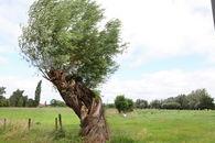 agrarisch landschap rond drongen©Layla Aerts.jpg