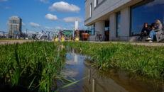 20210817_Oude Dokken_Houtdok_Openbaar Domein_Zitbanken_groen_wandelaars_fietsers_0010.jpg