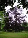 016 Maaltebruggepark (2).JPG