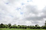 agrarisch landschap rond drongen (2)©Layla Aerts.jpg