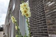 woonproject ramen brouwersstraat (2)©Layla Aerts.jpg