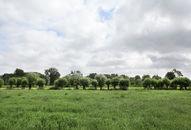 agrarisch landschap rond drongen (1)©Layla Aerts.jpg