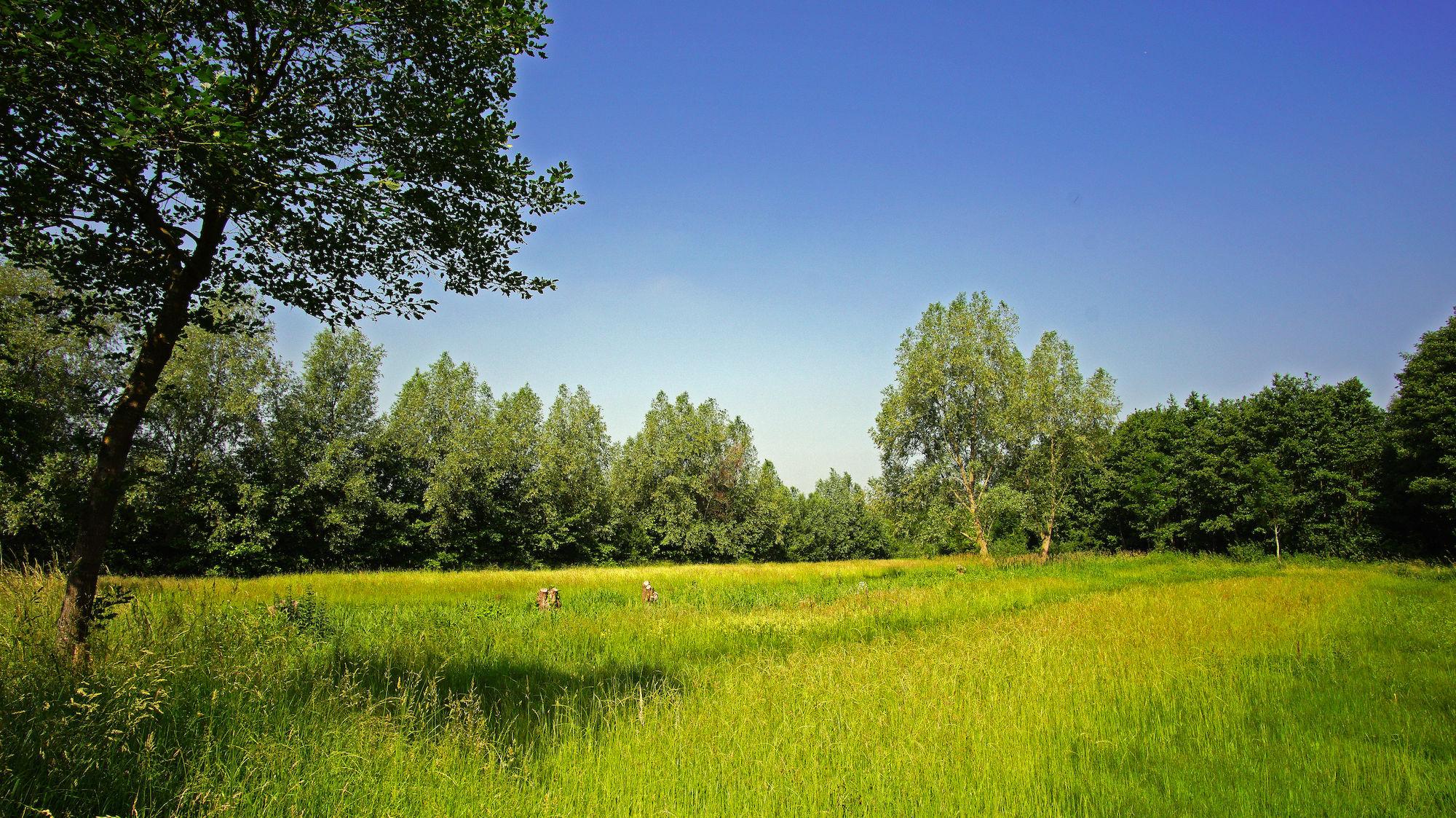 Groene Velden  (lente)