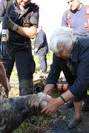 redding hond schelde