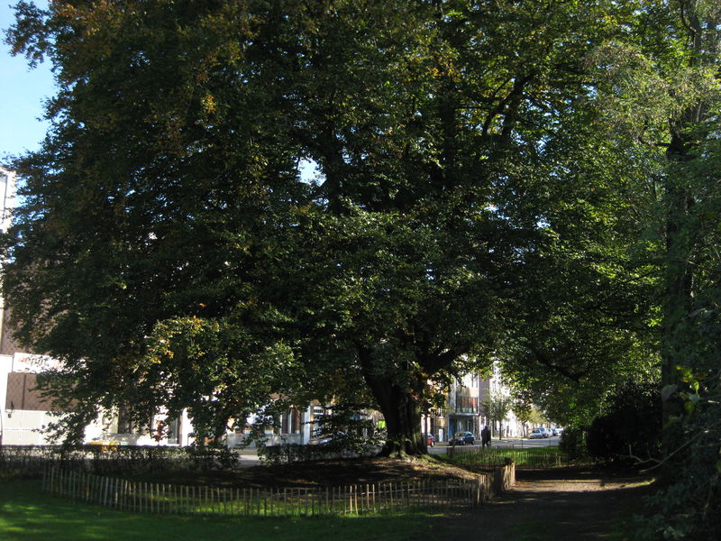 109 Parkje Burggravenlaan (1).jpg