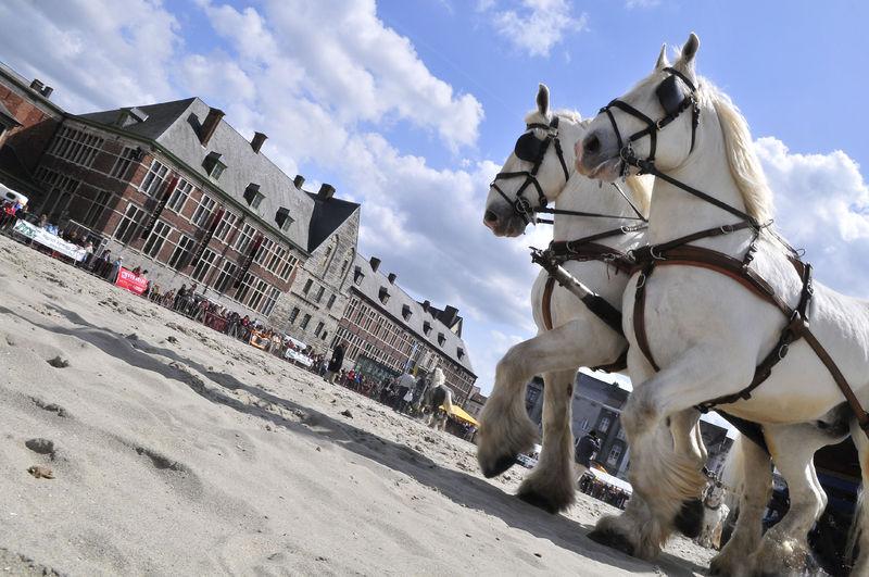20090503_Sint-Pieters_Trekpaardenfeest.jpg