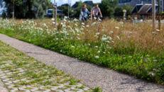 20210817_Oude Dokken_Houtdok_Openbaar Domein_Zitbanken_groen_wandelaars_fietsers_0044.jpg