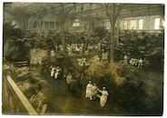 Gent: Coupure Rechts 308 / Casinoplein: Casino (Duits krijgshospitaal Palmenhaus): binnenzicht van de Palmenserre met Duits personeel en verpleegden , 1915-1916