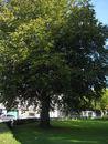109 Parkje Burggravenlaan (6).jpg