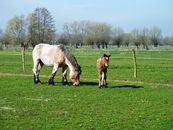 paardenfokkerij.jpg