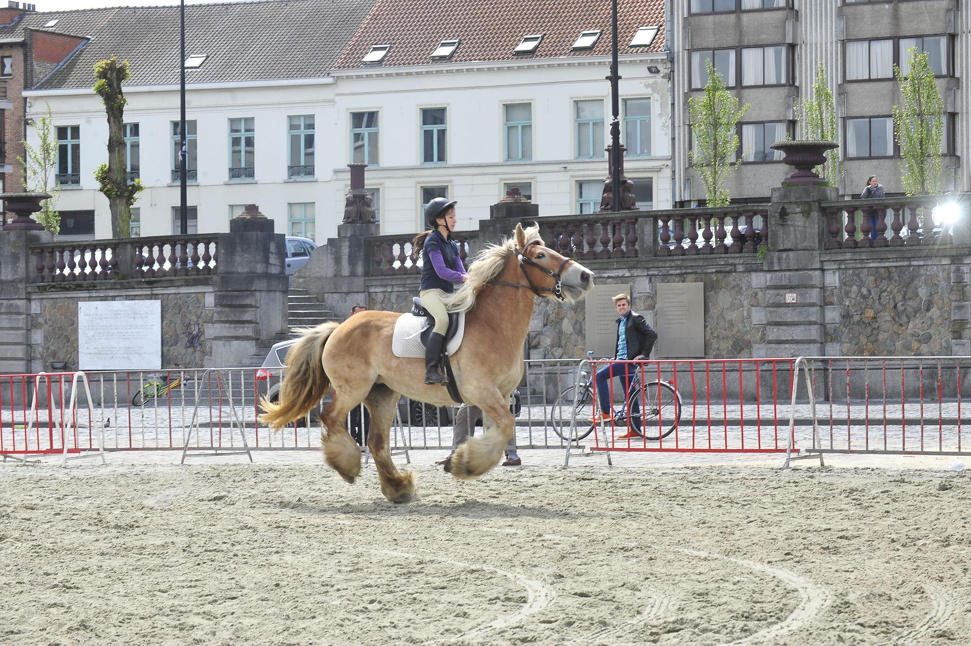 Trekpaardenfeest op Sint-Pietersplein
