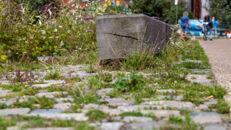 20210817_Oude Dokken_Houtdok_Openbaar Domein_Zitbanken_groen_wandelaars_fietsers_0037.jpg