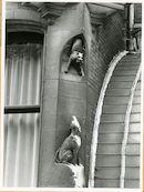 Gent: Koning Leopold II-laan 21: gevelbeeld van hond en kat, 1979