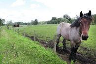 agrarisch landschap rond drongen (3)©Layla Aerts.jpg