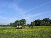 paardenfokkerij gavergrachtstraat.jpg
