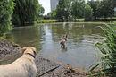 20110604_hondenzwemplaats.JPG