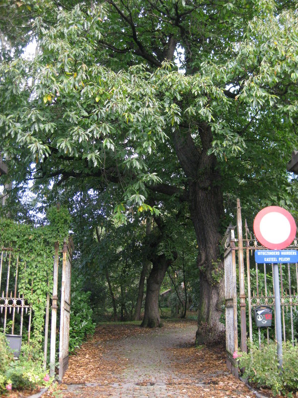 115 Park De Pélichy (6).jpg