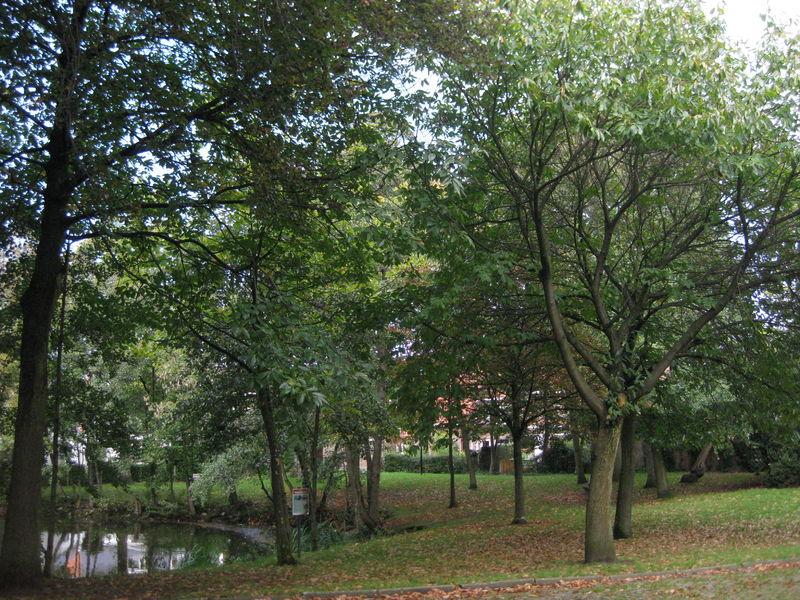 115 Park De Pélichy (3).jpg