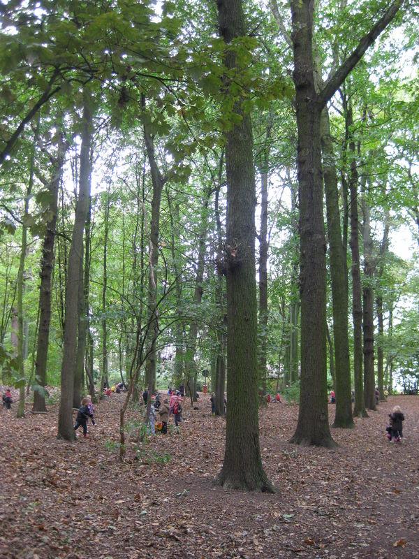 041 Wandelbos Slotendries (6).jpg