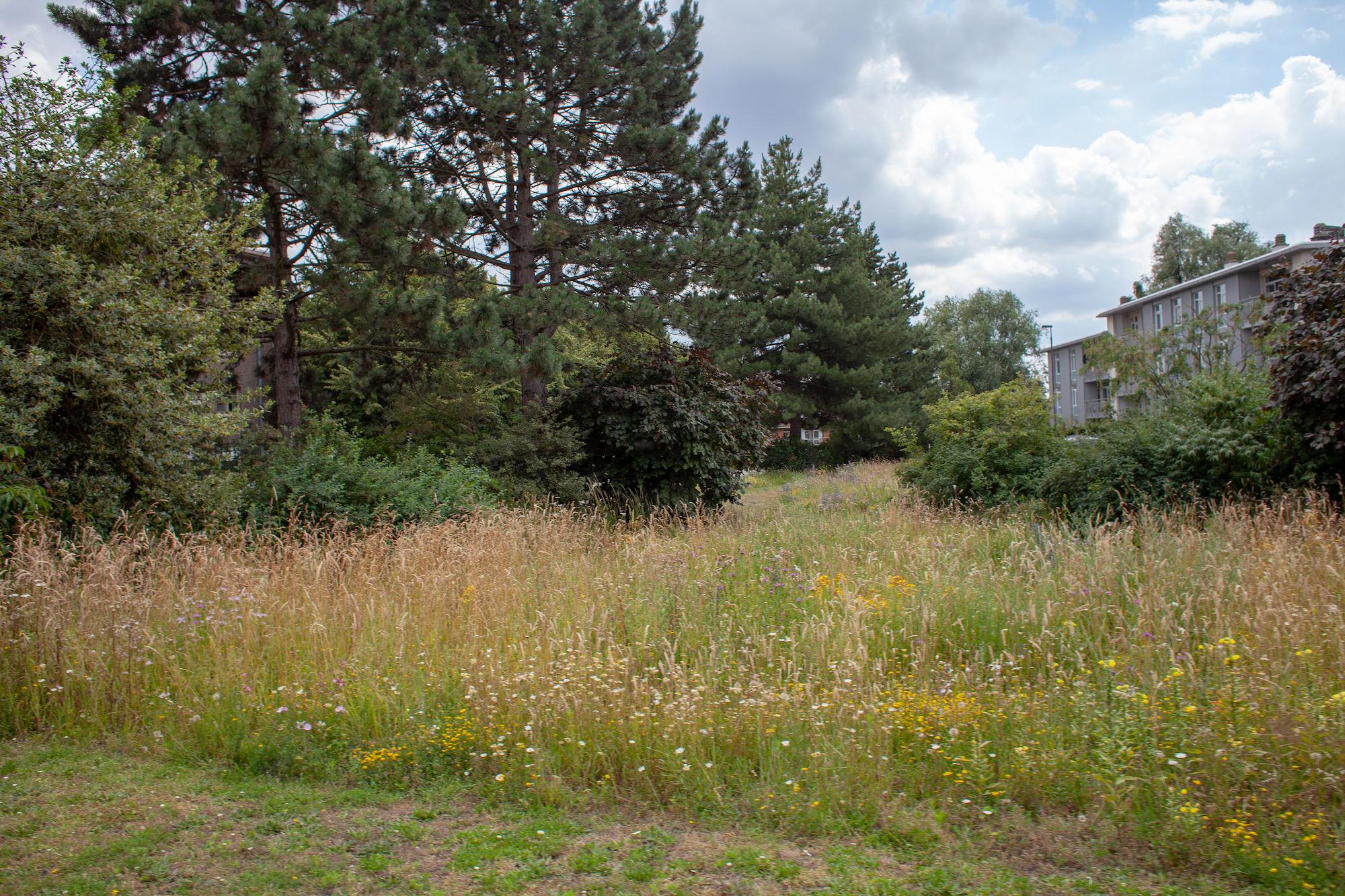 2019-07-02 Muide Meulestede prospectie Wannes_stadsvernieuwing_IMG_0354-3.jpg