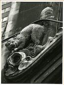 Gent: Belfortstraat 18: gevelbeeld: eekhoorn, 1980