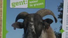 Gent In Beeld_2011-05-25_Schaapjes Blaarmeersen lang.mov