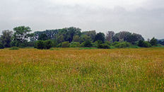 Bourgoyen  (lente)
